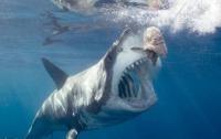 Акула утащила рыбака вместе с лодкой (видео)