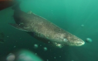 В Калифорнии акула напала на подростка