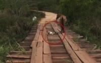 Лошадка застряла посреди моста: спасательная операция собрала 64 млн просмотров (видео)