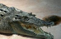 Шокирующее видео: гигантский крокодил забрел в автосервис