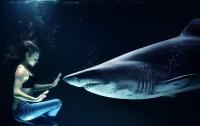 Редкую шестижаберную акулу засняли на камеру (видео)