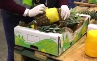 Кокаиновые ананасы: Крупную партию наркотиков изъяли в Португалии