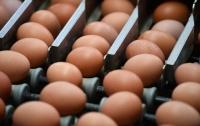 В Европе может разразиться новый яичный скандал