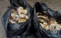 В зоне ЧАЭС задержали мужчину с 10 кг грибов