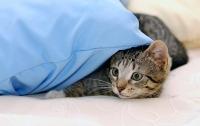 Медики рассказали об опасности сна в постели с кошкой