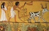 Историки утверждают, что гендерное равенство существовало в древнем Египте