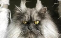 Хмурый кот с озлобленной мордочкой стал новой звездой Интернета