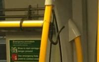 Змея прокатилась в пассажирском поезде зайцем