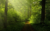 На Закарпатье ребенок пошел в лес и погиб от удара током