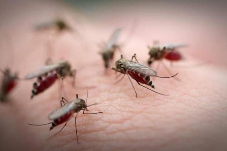 Ученые определили любимую группу крови комаров
