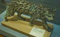 Мадридский музей естественных наук можно посетить виртуально