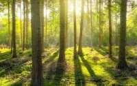 СБУ разоблачила контрабандистов леса