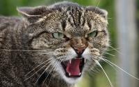 Кот покусал людей