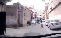 Собака привела медиков к потерявшему сознание хозяину (видео)