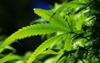 В Британии начали продавать медицинскую марихуану
