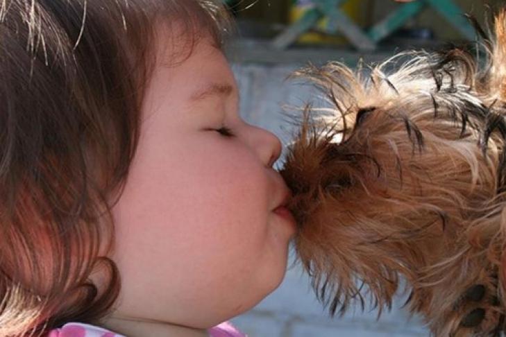 Поцелуи с собаками могут привести к потере зубов