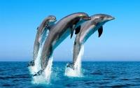 В Индии дельфины признаны личностями