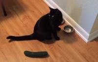 Подборку курьезных видео про реакцию котов на