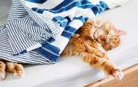 Создан переводчик с кошачьего языка на человеческий