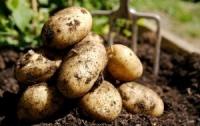 Беларусь отменила запрет на ввоз украинского картофеля