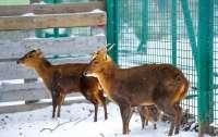 Новонароджене в неволі оленя почало гавкати