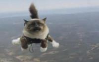 Коты «завели» в интернете собственную соцсеть