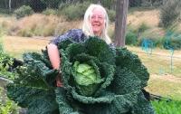 Австралийцы вырастили капусту размером с человека