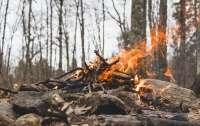 Спасатели нашли в лесу пьяного мужчину, сбежавшего от жены