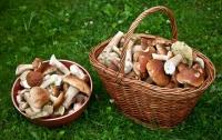В Херсонской области целая семья отравилась грибами: отец и дочь погибли