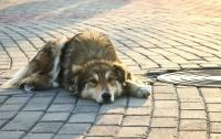 Около 3 тыс. бездомных собак насчитали в Киеве