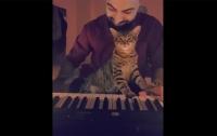 Турецкий кот-меломан удивил пользователей Instagram (видео)