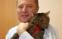 Российский депутат пришел на работу с котом