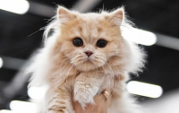 Кошка спасла хозяев от смерти