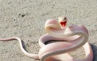 Шестилетний ребенок дважды пережил укусы смертельно ядовитых змей