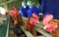 Фермеров призвали сократить количество применяемых антибиотиков