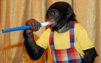 В Чехии предложили запретить диких животных в цирках