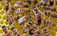 Сердце не выдержало: умер пасечник, которому отравили тысячи пчел