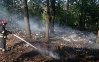 Под Киевом возросло количество пожаров в экосистемах