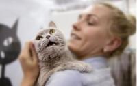 Ученые заявили о склонности любителей кошек к шизофрении