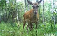 Показали, как живут животные в Чернобыле (фото)