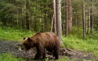 Медведь прокрался в гараж и украл пончик (видео)