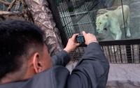 В зоопарке Индианаполиса львица задушила мужа