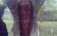 В парке детской больницы на дереве проявился образ Богоматери с младенцем