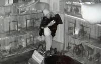 Вор с ведром на голове украл во Флориде 40 голубей