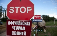 Жители Полтавы пытались продать на убой сотни зараженных АЧС свиней