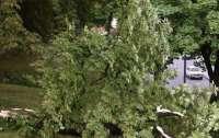 Во Львове прошел разрушительный ураган (видео)