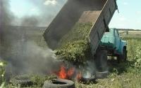 Милиция выявила на поле коноплю на 1,2 миллиарда гривен