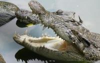Неудачная охота: в Зимбабве крокодилы съели опытного охотника
