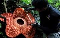 Ученые обнаружили один из крупнейших в мире