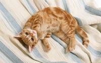 В Интернете уже есть социальная сеть для котов